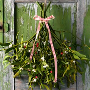 Mistletoe (12 oz.)