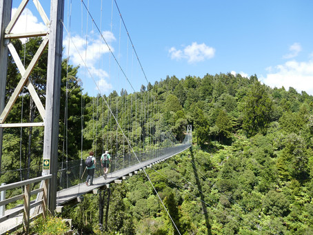 THE TIMBER TRAIL CYCLEWAY - AN UNFORGETTABLE EXPERIENCE