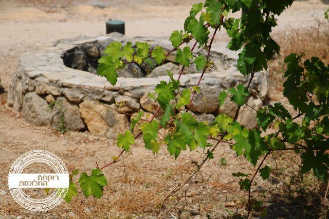 באר מים ביער חורשים