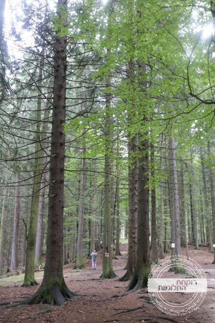 טיול ביער, פויאנה בראשוב