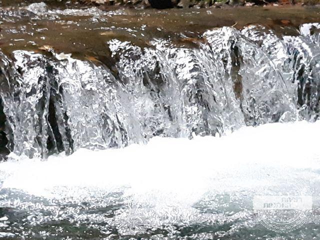 שמורת טבע בהרי הקרפטים | רוקחת החלומות