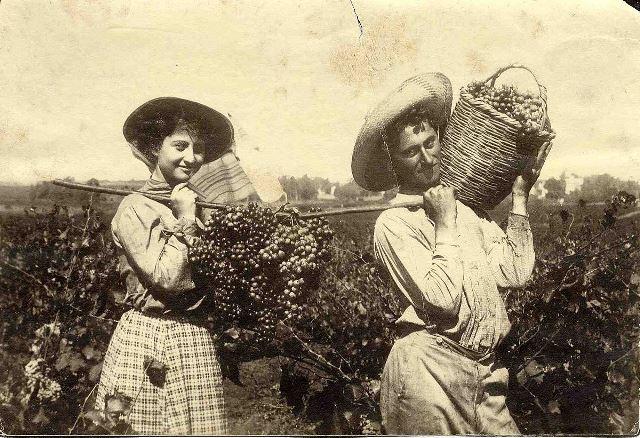 מסורת של יין בארץ ישראל
