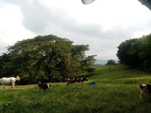 EN OFERTA VENDO 7 MZ AGRICOLAS EN ZAPOTITAN ABUNDANCIA DE AGUA Y EXCELENTE PASTO