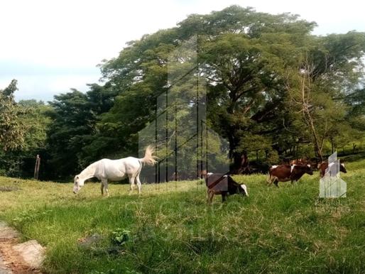 Vendo hacienda de 12 MZ y 67 cabezas de ganado en el Valle de Zapotitán con nacimientos de agua.