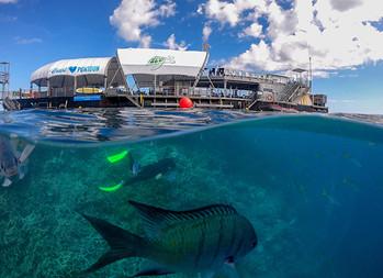 Great Barrier Reef Adventure WEB.jpg