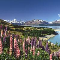 NZ Image Tile.png
