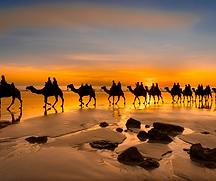 For our new 2021/2022 Hosted Journeys, we've handpicked some amazing new itineraries that highlight iconic Australian destinations. We'd like to invite you to a morning tea to showcase what's currently on sale and what we have in the pipeline.