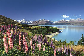 NEW ZEALAND, Mt Cook, Purchased.jpg