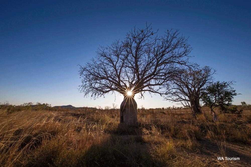 Kimberley wilderness