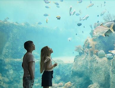 Living Reef.PNG