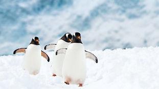 top-pingviner-neko-harbour-antarktisstef