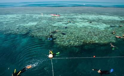 hardy-reef-snorkelling-area.jpg