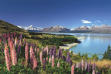 NEW-ZEALAND,-Mt-Cook,-Purchased.png