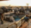 AFRICA,-Zimbabwe,-Hwange,-Mehimba-Safari