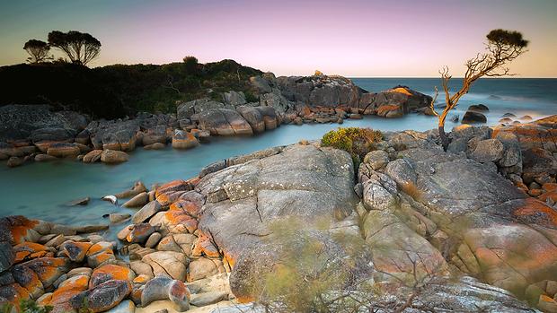 Capture Tasmania