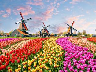 Ce salarii oferă angajatorii pentru bucătari, ingineri și agricultori români în Olanda