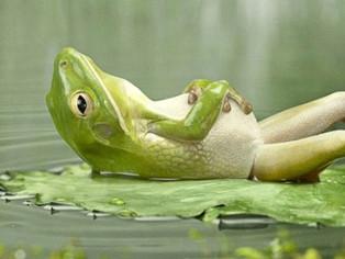 Top zece al celor mai odihnitoare activitati
