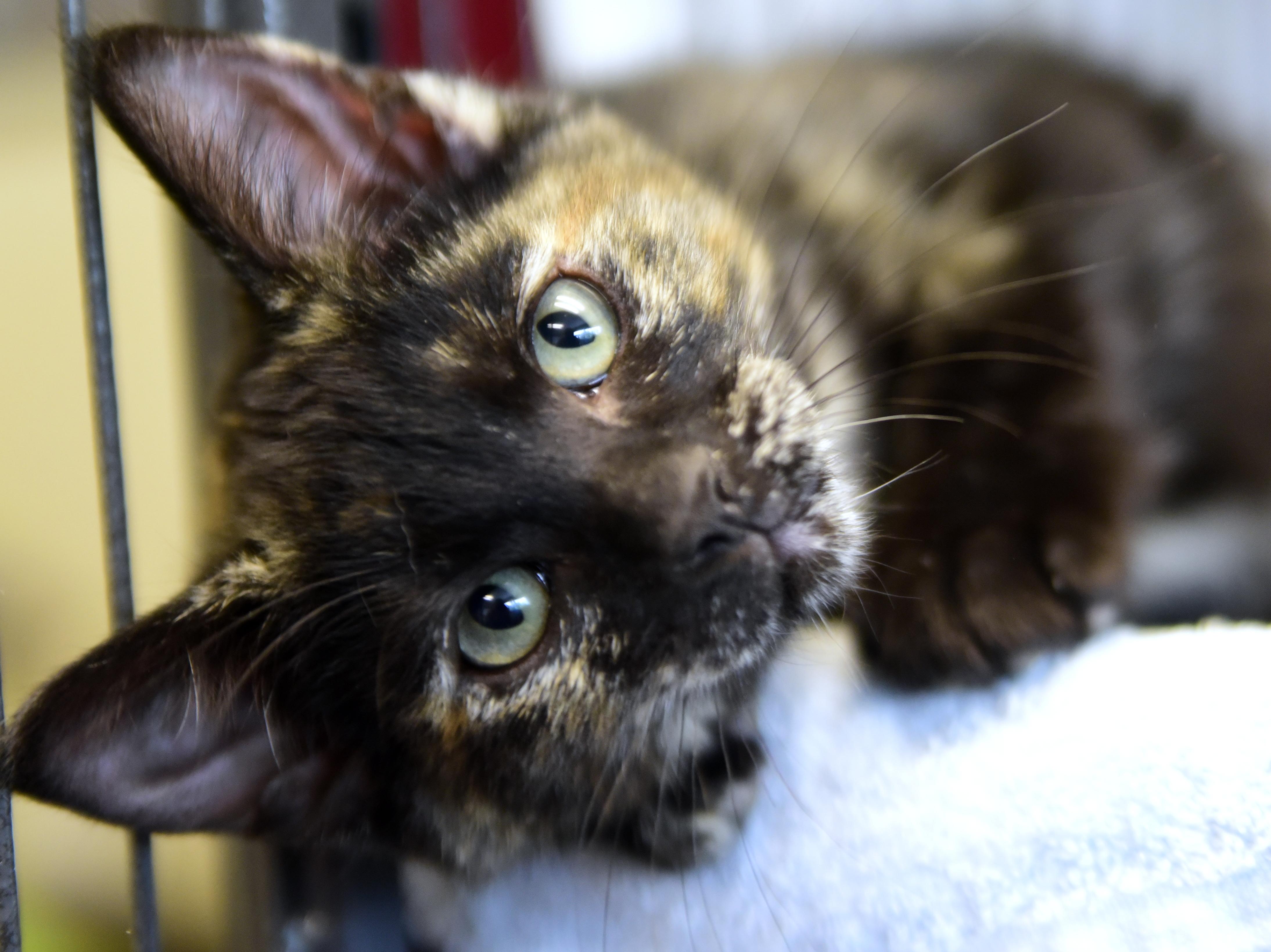 Mat-Su Animal Care and Regulation