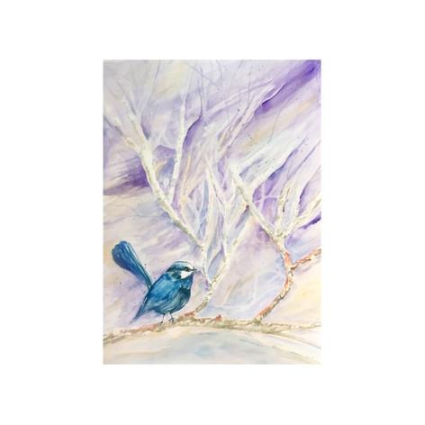 Winter Blue Wren