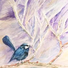 Blue Wren Print