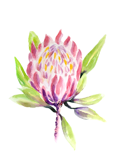 Pretty Pink Protea Watercolour Painting