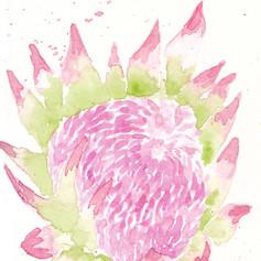 Hawaiian Protea