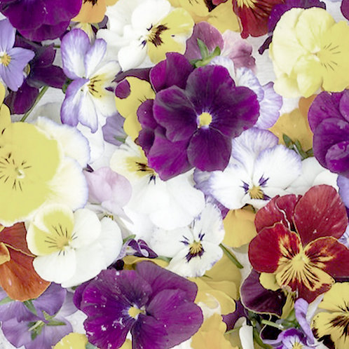 Edible Flowers - Violetta Punnet