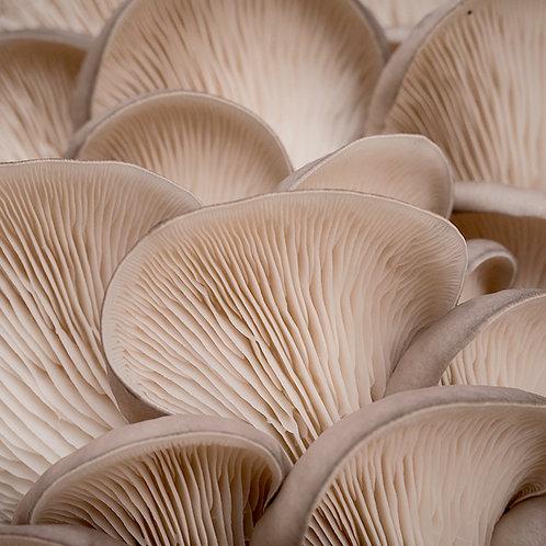 Mushrooms Oyster 300g