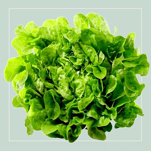 Oak Leaf Salad each