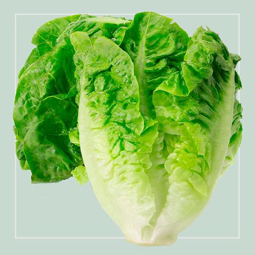 Lettuce Baby Gem 2each in packet