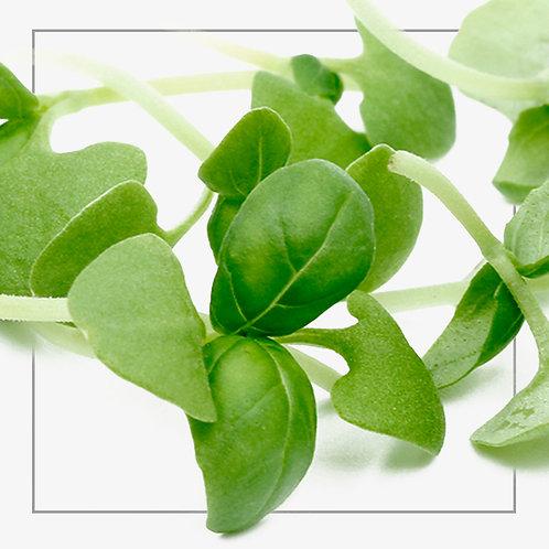 Micro Basil - Green Punnet