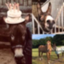 Elvis Donkey.jpeg