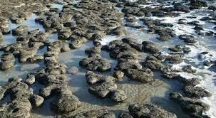 Urge preservar los estromatolitos, testigos de la evolución del planeta