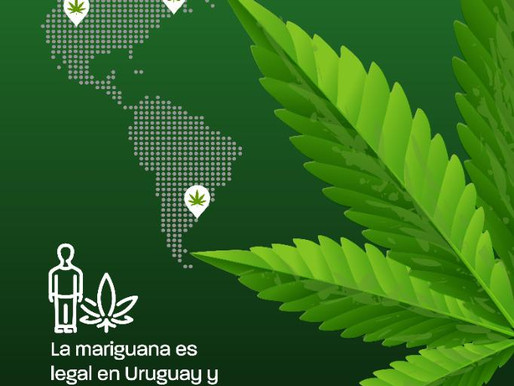 ¿Sabes dónde es legal la mariguana?