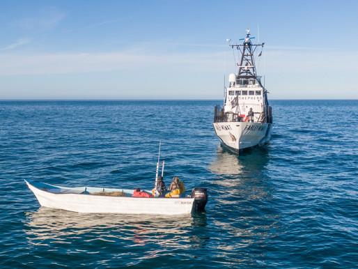Colisión en el mar: atacan a barcos de Sea Shepherd en el refugio de la vaquita marina en México