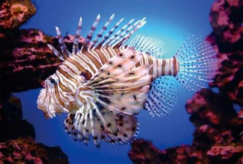 En peligro, los arrecifes de Bajos del Norte, en Yucatán: Oceana