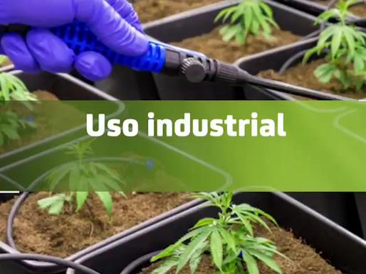 Podría México ser un gran productor de cáñamo, al regularizar la cannabis