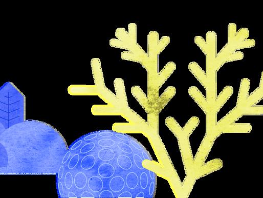 Se pierde 14% de corales por el calentamiento del mar: PNUMA