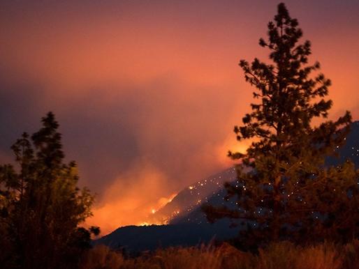 El domo de calor mortal en Norteamérica fue causado por el cambio climático: científicos
