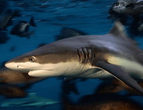 ¿Más aterrador que un océano lleno de tiburones?
