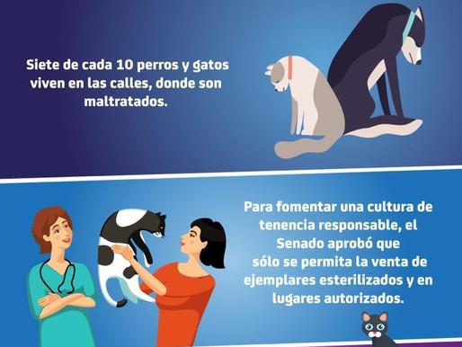 Promueve el Senado la adopción de perros y gatos esterilizados, en lugares autorizados
