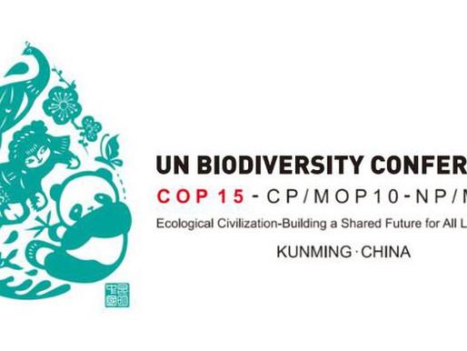 El tiempo no está del lado de la humanidad para rescatar la biodiversidad
