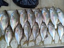 Fish Market2.jpg