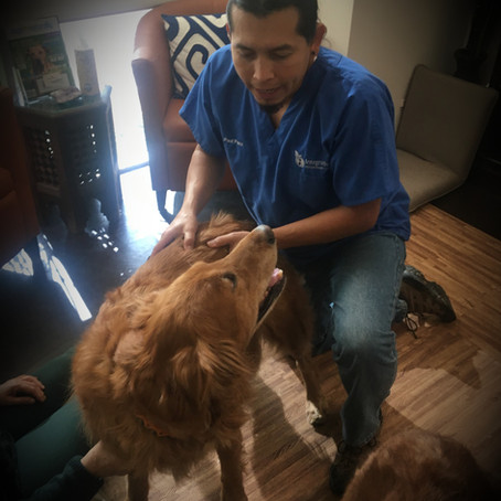 Animal Chiropractic (Part 1)