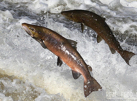 Fish-Based Dry Pet Food
