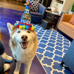 Cuda birthday