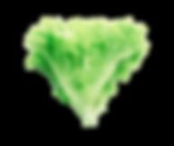 20200105_180339_0000-removebg-preview.pn