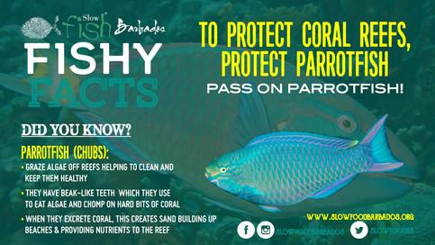 Protect Parrotfish