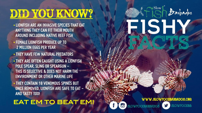 Lionfish - did you know
