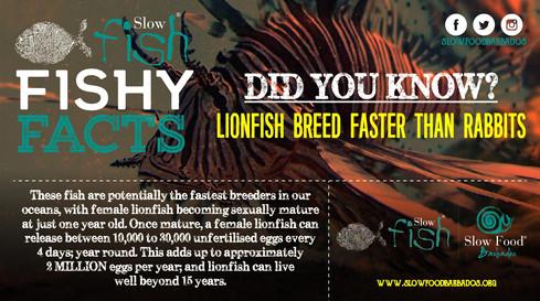 Lionfish breeding